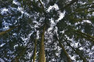 Forest Canopy as Seen from Below by Kike Calvo