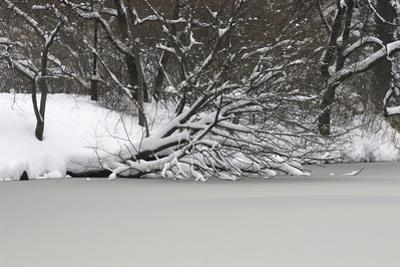 Snow Laden Trees over a Frozen Pond by Kike Calvo