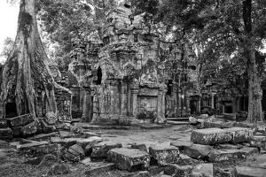 Theraveda Buddhist Monks at the Ta Prohm Temple in the Angkor Complex by Kike Calvo