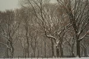 Trees in Central Park During a Blizzard by Kike Calvo