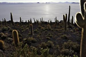 Cactus at Isla Pescado Salar De Uyuni Bolivia Silhouette in the Setting Sun Backlit Rocks in the An by kikkerdirk
