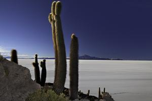 Cactus at Isla Pescado Salar De Uyuni Bolivia Sunset at the Island in the Salt Desert at the High A by kikkerdirk
