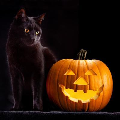 Halloween Pumpkin and Black Cat Scary Spooky and Creepy Horror Holiday Superstition Evil Animal And