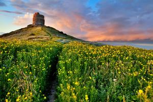 Spring Flower Field with Trail to Castle Tower Bright Vivid Colors Bright Yellow Pasture Colorful S by kikkerdirk