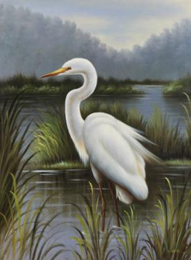 Morning Egret by Kilian