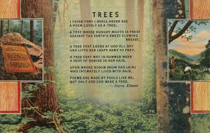 Kilmer Tree Poem, Forest