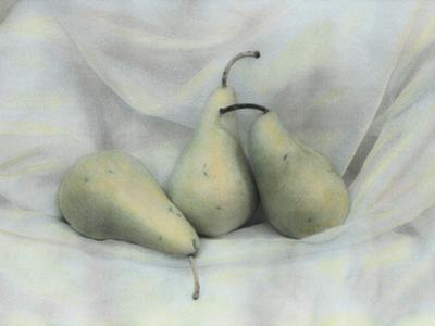 Pear Study No.1731
