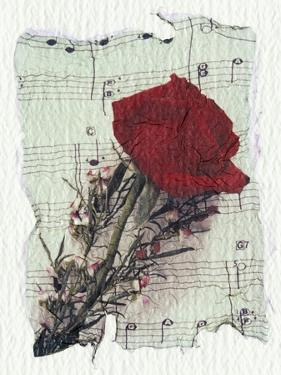 Rose and Music by Kim Koza