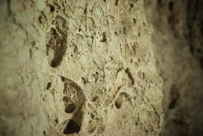 Close Up of Fossilized Algae Inside Los Corales (Galaxies Cave) by Kim Walker