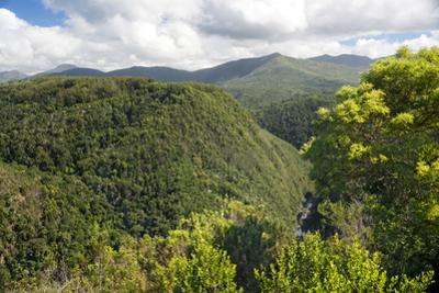 Forested Terrain, Plettenberg Bay, Garden Route, South Africa, Africa by Kim Walker