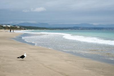 Indian Ocean Shoreline, Mosselbay, Garden Route, Western Cape, South Africa, Africa by Kim Walker