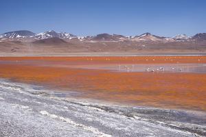 Laguna Colorada (Red Lagoon) Encrusted by Kim Walker