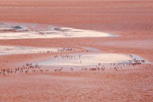 Laguna Colorada (Red Lake) by Kim Walker