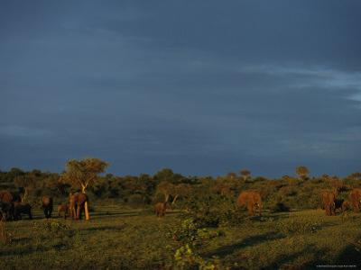 African Elephants on a Botswana Plain at Dawn