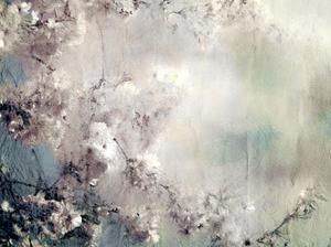 Dreaming of Cherry Blossoms by Kimberly Allen