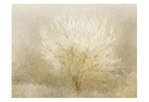 Dreaming Tree by Kimberly Allen