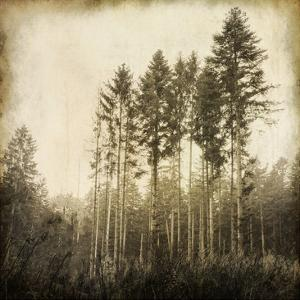 Enchanted Forest 3 by Kimberly Allen