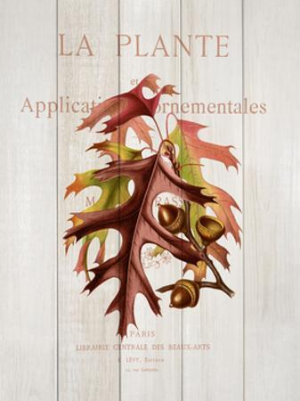 Fall Botanical 2 by Kimberly Allen