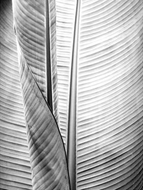 Metal BW Plant 1 by Kimberly Allen