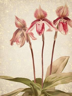 Orchids 4 by Kimberly Allen