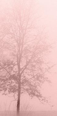 Pink Dawn 2 by Kimberly Allen