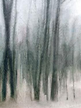 Shrouded Forest 2 by Kimberly Allen
