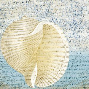 Spotted Shell 1 by Kimberly Allen