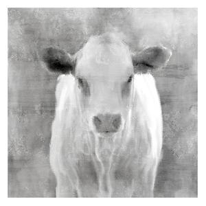 Spring Calf by Kimberly Allen
