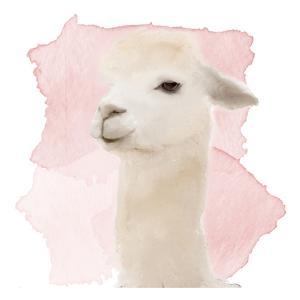 Watercolor Llama by Kimberly Allen
