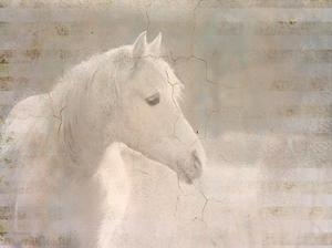White Knight Serenity by Kimberly Allen