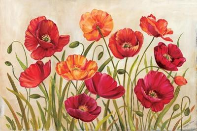 Poppies by Kimberly Poloson