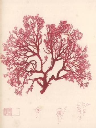 Red Botanical Study I