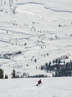 Skier at Jackson Hole Ski, Jackson Hole, Wyoming, United States of America, North America by Kimberly Walker