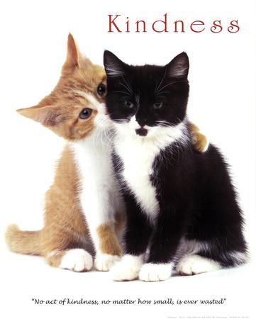 https://imgc.allpostersimages.com/img/posters/kindness-two-cute-kittens_u-L-F5B91O0.jpg?p=0