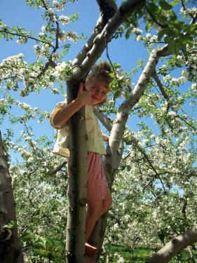 Girl in Tree in Apple Orchard, Glastonbury, CT by Kindra Clineff