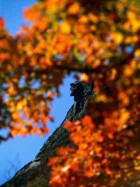 Old Man of the Mt. and Fall Foliage, NH by Kindra Clineff
