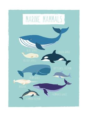 Marine Mammals by Kindred Sol Collective
