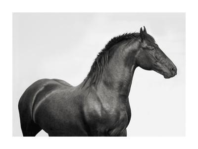 https://imgc.allpostersimages.com/img/posters/king-mamba-stallion_u-L-F8WDKK0.jpg?artPerspective=n