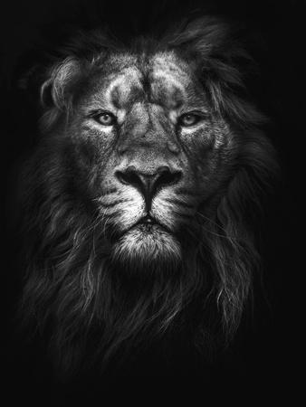 https://imgc.allpostersimages.com/img/posters/king-of-kings_u-L-Q1G62M50.jpg?p=0