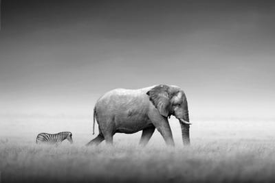 Kings of Nature - Elephant and Zebra