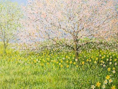 Springtime Impression by kirilstanchev