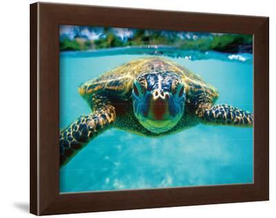 Honu, Turtle