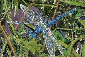 Blue Dragonfly by Kirstie Adamson
