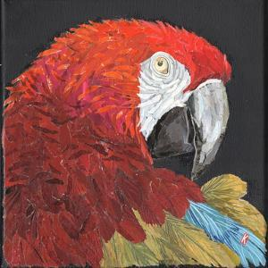 Red Macaw Parrot by Kirstie Adamson