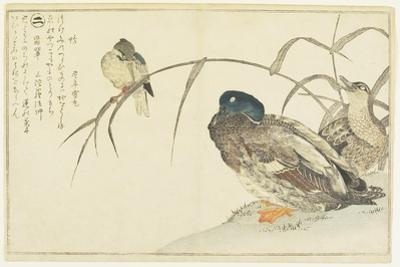Mallards and a Kingfisher, 1790 by Kitagawa Utamaro