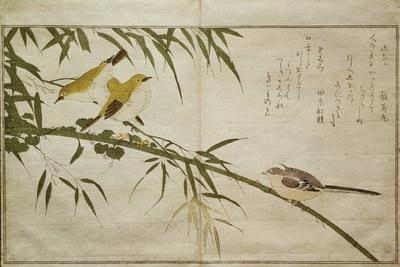 P.332-1946 Vol.2 F.6 Long-Tailed Tit and Three White Eyes, from an Album 'Birds Compared in…