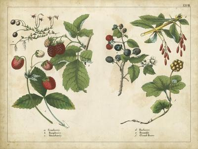 https://imgc.allpostersimages.com/img/posters/kitchen-fruits-ii_u-L-PNC3510.jpg?p=0