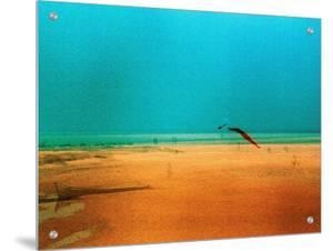 Kite Flying on Golden Beach