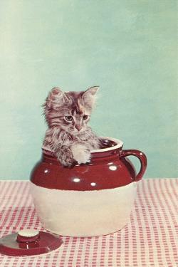 Kitten in a Jug