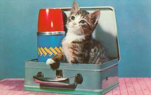 Kitten in a Lunchbox, Retro